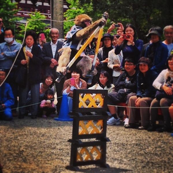 浅草寺の猿