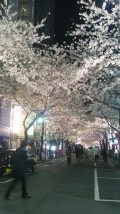 sakura_tokyo