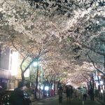 東京の桜、キレイ!